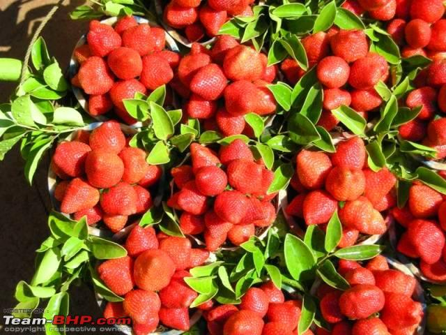 Strawberries in Mahabaleshwar, Courtesy: Team BHP website