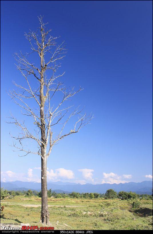 A trip to Arunachal Pradesh - Nameri National Park-img_5377.jpg