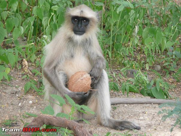 Name:  26_monkey_business_web.jpg Views: 1133 Size:  127.6 KB