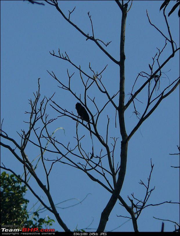 Nameri, Bhalukpong and the Splendid Jia Bhoreli : What a Weekend!-p1040033.jpg