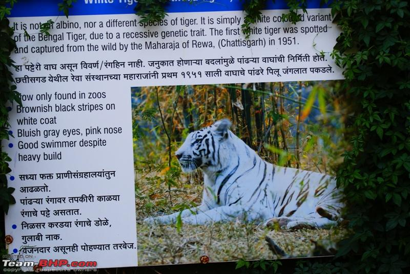 Name:  g Facts about the White Tiger.JPG