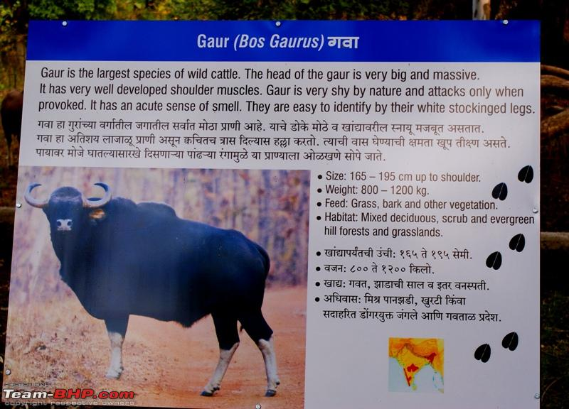 Name:  I The wild Gaur.JPG