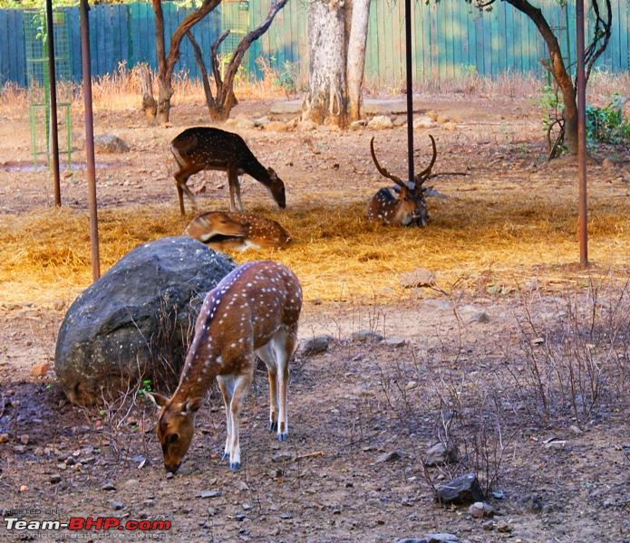 Name:  j Spotted Deer.JPG