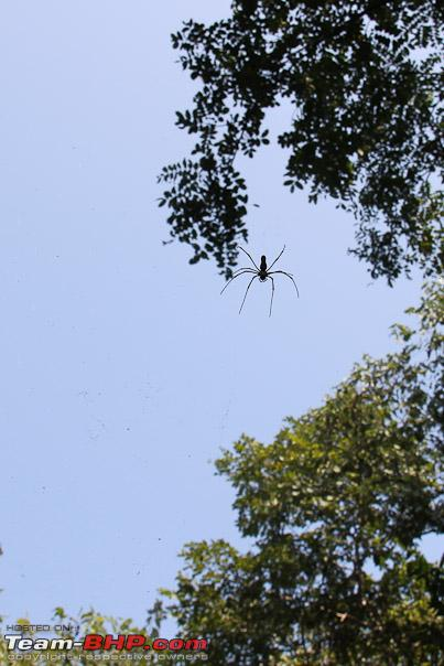 Name:  spider_web.jpg