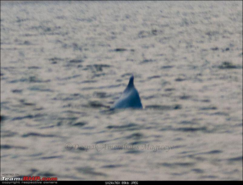 Unwind Karde!-dolphin.jpg