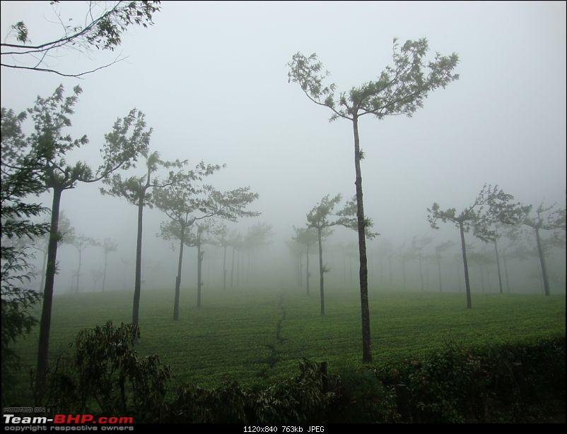 Hyd - Munnar (A Well Planned Trip Went Bad, But Still Enjoyed)-dsc00956tbhp.jpg