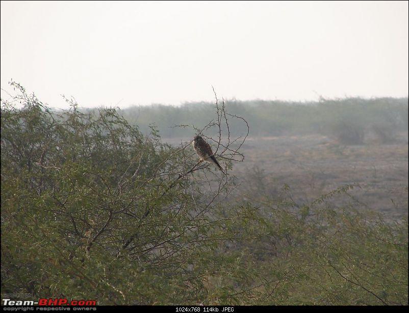 Close encounters at Rann of Kutch--Big Fat Rat-dsc09804.jpg