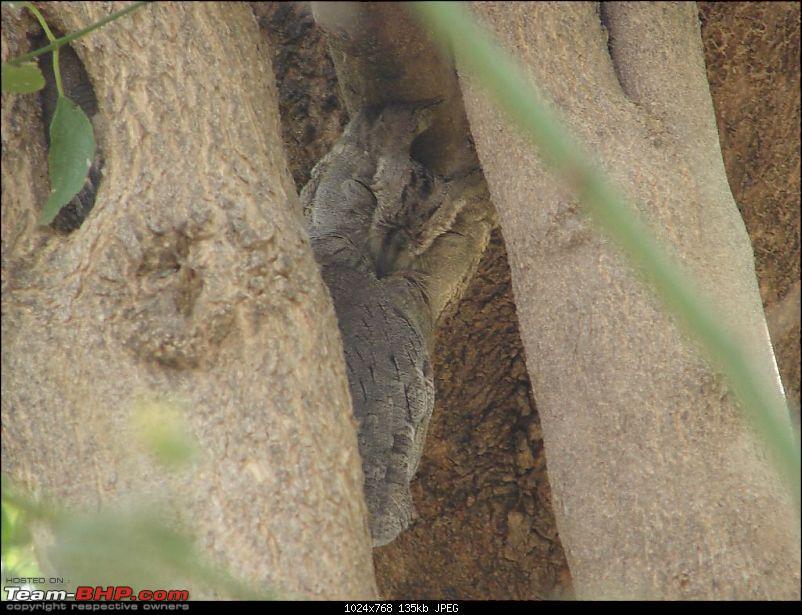 Close encounters at Rann of Kutch--Big Fat Rat-dsc09840.jpg