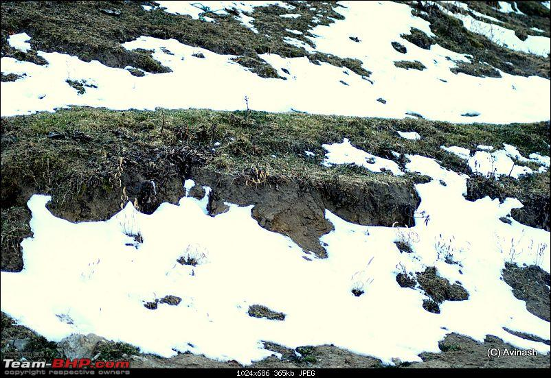 """Himachal Pradesh : """"The Great Hunt for Snowfall"""" but found just snow-dsc_0573.jpg"""