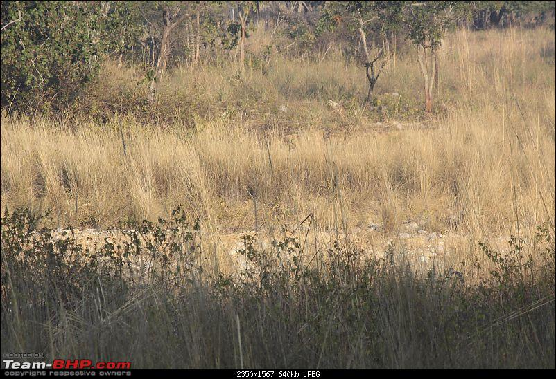 Trip to Corbett and Pangot. Did not spot the tiger though-_mg_6772.jpg