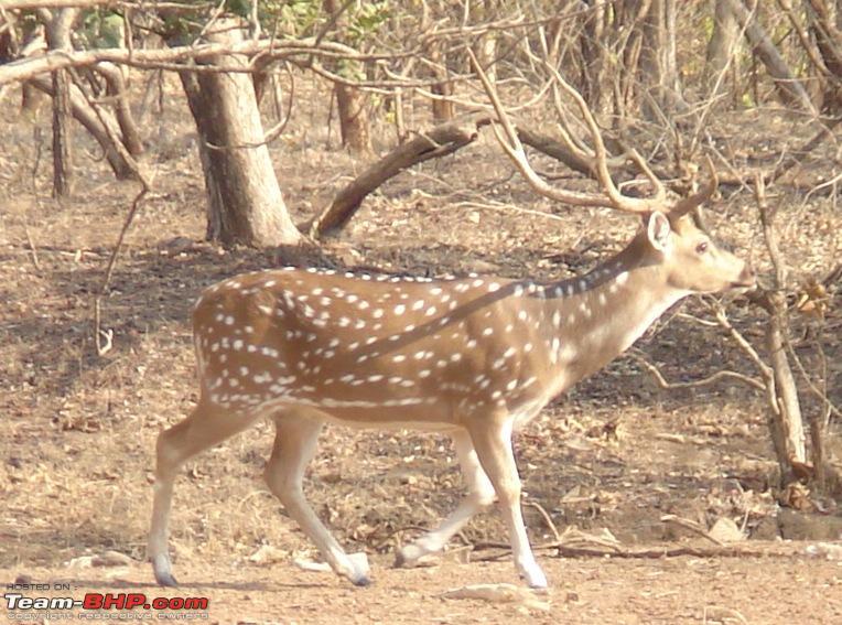 Name:  male deer1.JPG Views: 2740 Size:  183.6 KB