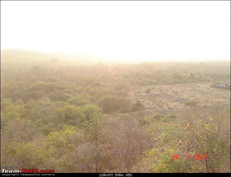 The Lion, The Beach & The Shrine Eternal (Sasan Gir, Diu & Somnath)-thick-forest.jpg