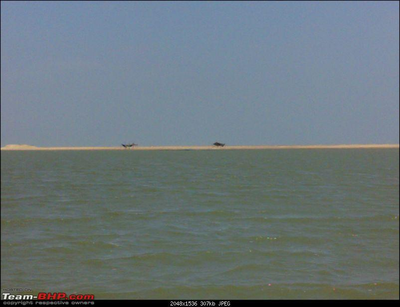 A journey to the world's second largest mangrove forest.-pichavaram4.jpg
