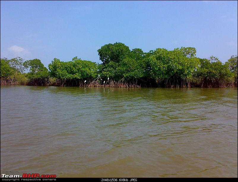 A journey to the world's second largest mangrove forest.-pichavaram21.jpg