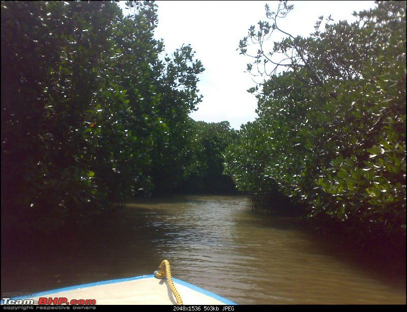 A journey to the world's second largest mangrove forest.-pichavaram33.jpg