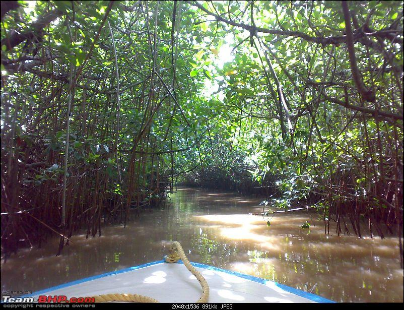 A journey to the world's second largest mangrove forest.-pichavaram37.jpg