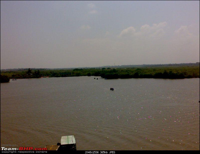 A journey to the world's second largest mangrove forest.-pichavaram45.jpg