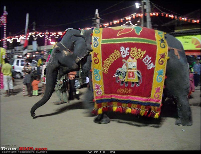 A trip close to heart - Pune to Tirunelveli-elephant.jpg