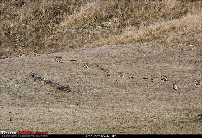 Trip to Corbett and Pangot. Did not spot the tiger though-_mg_7087.jpg