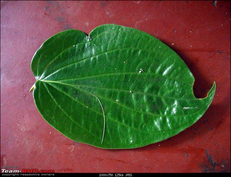 A trip close to heart - Pune to Tirunelveli-leaf.jpg