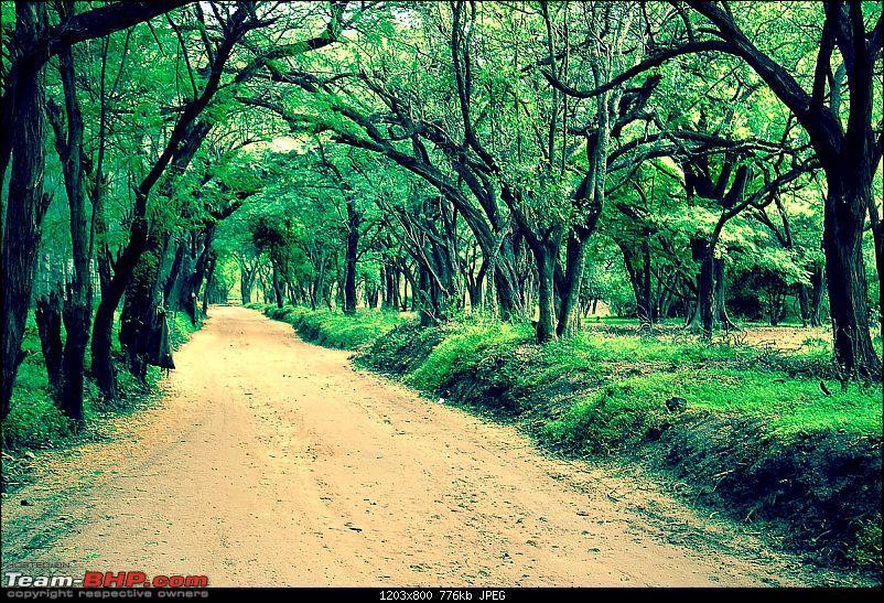 Ooty, Coonoor, Kotagiri, Isha Yoga Centre-From Bangalore-dhyanalingam-path.jpg