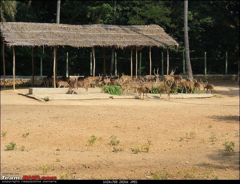 Story of a Vacation (:-))-mysore-zoo-32.jpg