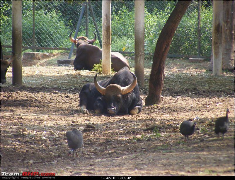 Story of a Vacation (:-))-mysore-zoo-35.jpg