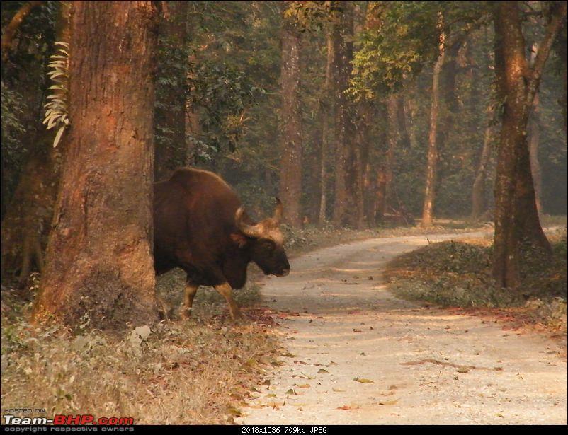 Kolkata to Dooars- A memorable road trip-pic-210.jpg