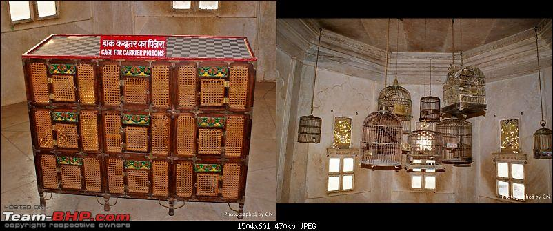An Incredible Road Trip of a Lifetime to Udaipur, The Most Romantic City in the World-6-closeup-cages.jpg
