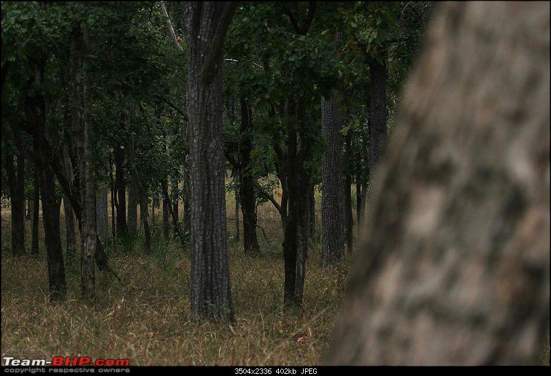 Tadoba, Pench forests, wildlife and 4 tigers!-pt8.jpg