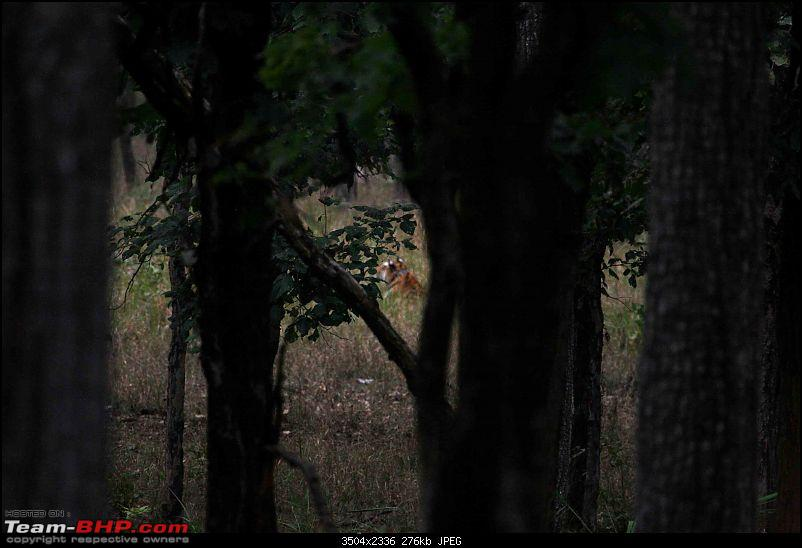 Tadoba, Pench forests, wildlife and 4 tigers!-pt47.jpg
