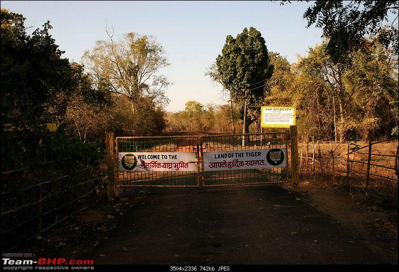 Tadoba, Pench forests, wildlife and 4 tigers!-img_5121.jpg
