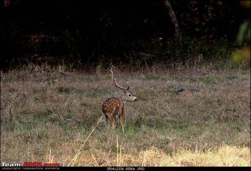 Tadoba, Pench forests, wildlife and 4 tigers!-pt50.jpg