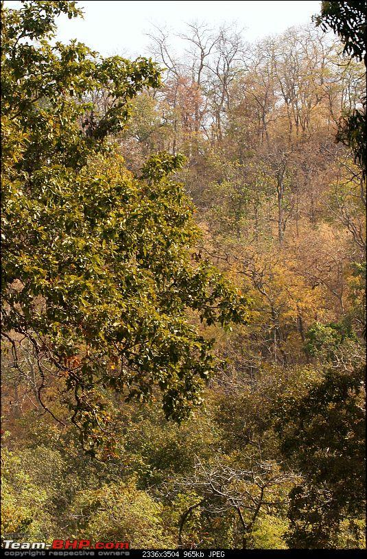 Tadoba, Pench forests, wildlife and 4 tigers!-img_5170.jpg