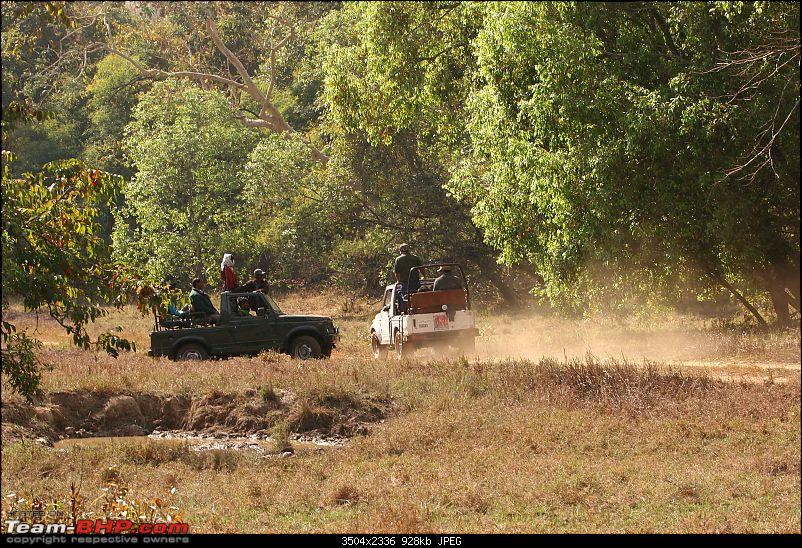Tadoba, Pench forests, wildlife and 4 tigers!-img_5171.jpg