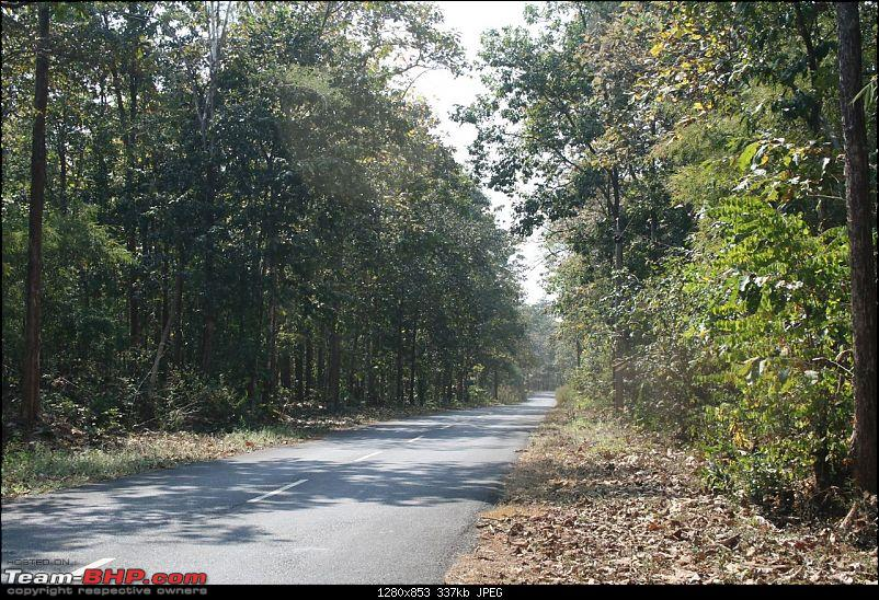 When Forests beckon-img_0272.jpg
