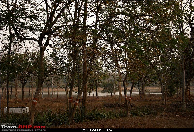 Tadoba, Pench forests, wildlife and 4 tigers!-img_5296.jpg