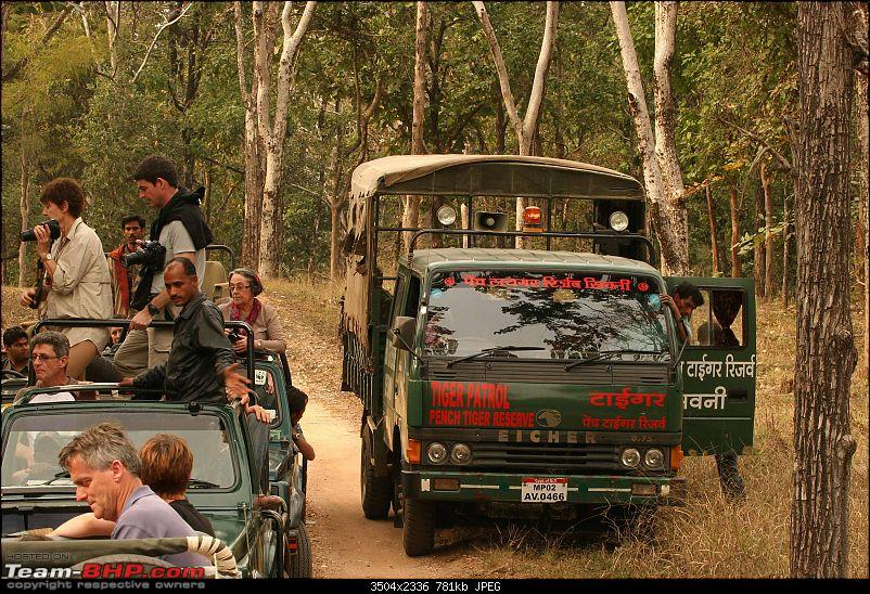 Tadoba, Pench forests, wildlife and 4 tigers!-img_5489.jpg