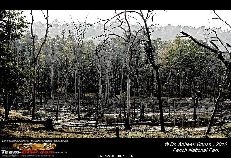 Tadoba, Pench forests, wildlife and 4 tigers!-drying-beejamattha-water-hole.jpg