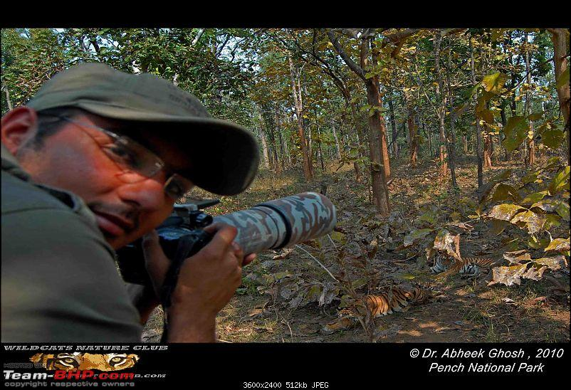 Tadoba, Pench forests, wildlife and 4 tigers!-photographer-cubs.jpg