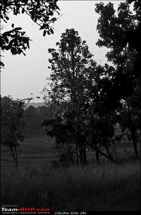 Tadoba, Pench forests, wildlife and 4 tigers!-img_1888edit2.jpg