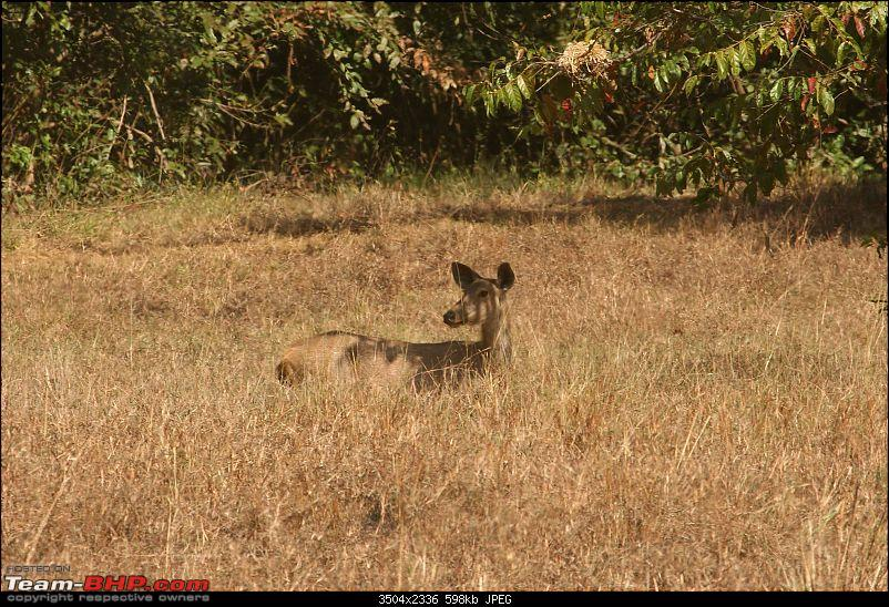 Tadoba, Pench forests, wildlife and 4 tigers!-img_5165.jpg