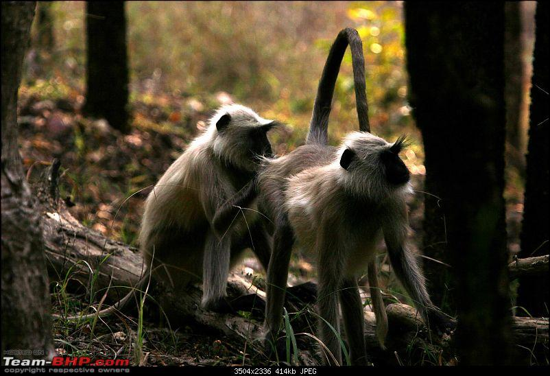 Tadoba, Pench forests, wildlife and 4 tigers!-img_5323.jpg