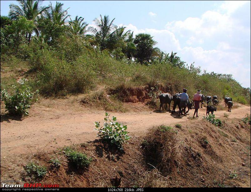 Photoblog of destinations in & around Trivandrum, Kerala-dsc02657.jpg