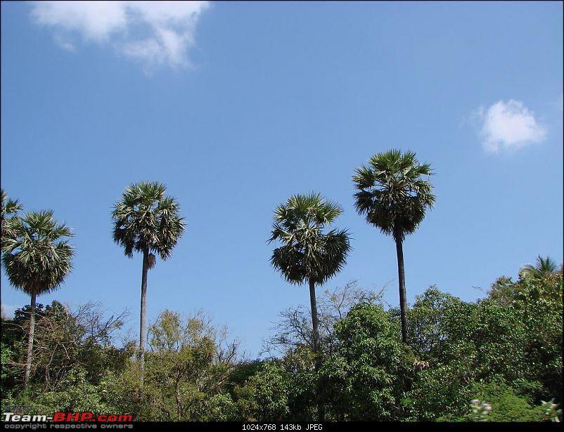 Photoblog of destinations in & around Trivandrum, Kerala-dsc02660.jpg