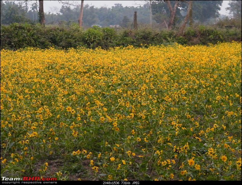 Kolkata to Dooars- A memorable road trip-pic-468.jpg