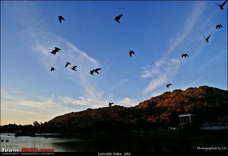 An Incredible Road Trip of a Lifetime to Udaipur, The Most Romantic City in the World-4-birds_flying_to_their_nests.jpg