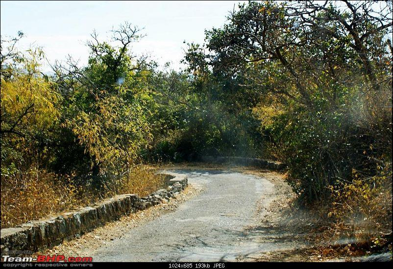 An Incredible Road Trip of a Lifetime to Udaipur, The Most Romantic City in the World-12-jungle_trail.jpg