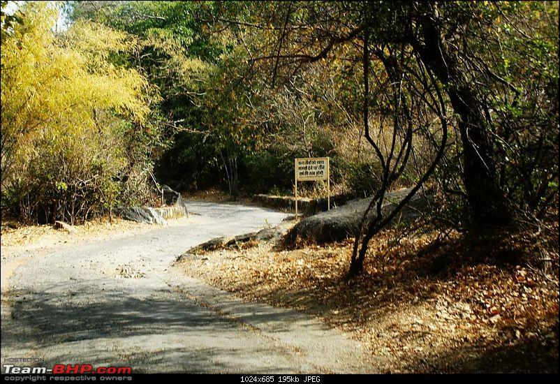 An Incredible Road Trip of a Lifetime to Udaipur, The Most Romantic City in the World-17-jungle_trail.jpg