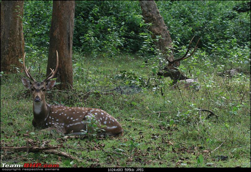 Life in Jungles - A Weekend at Kabini-bison-321-copy.jpg